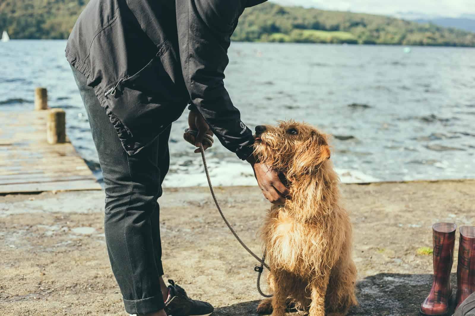 Fun jobs that pay well: Dog walker