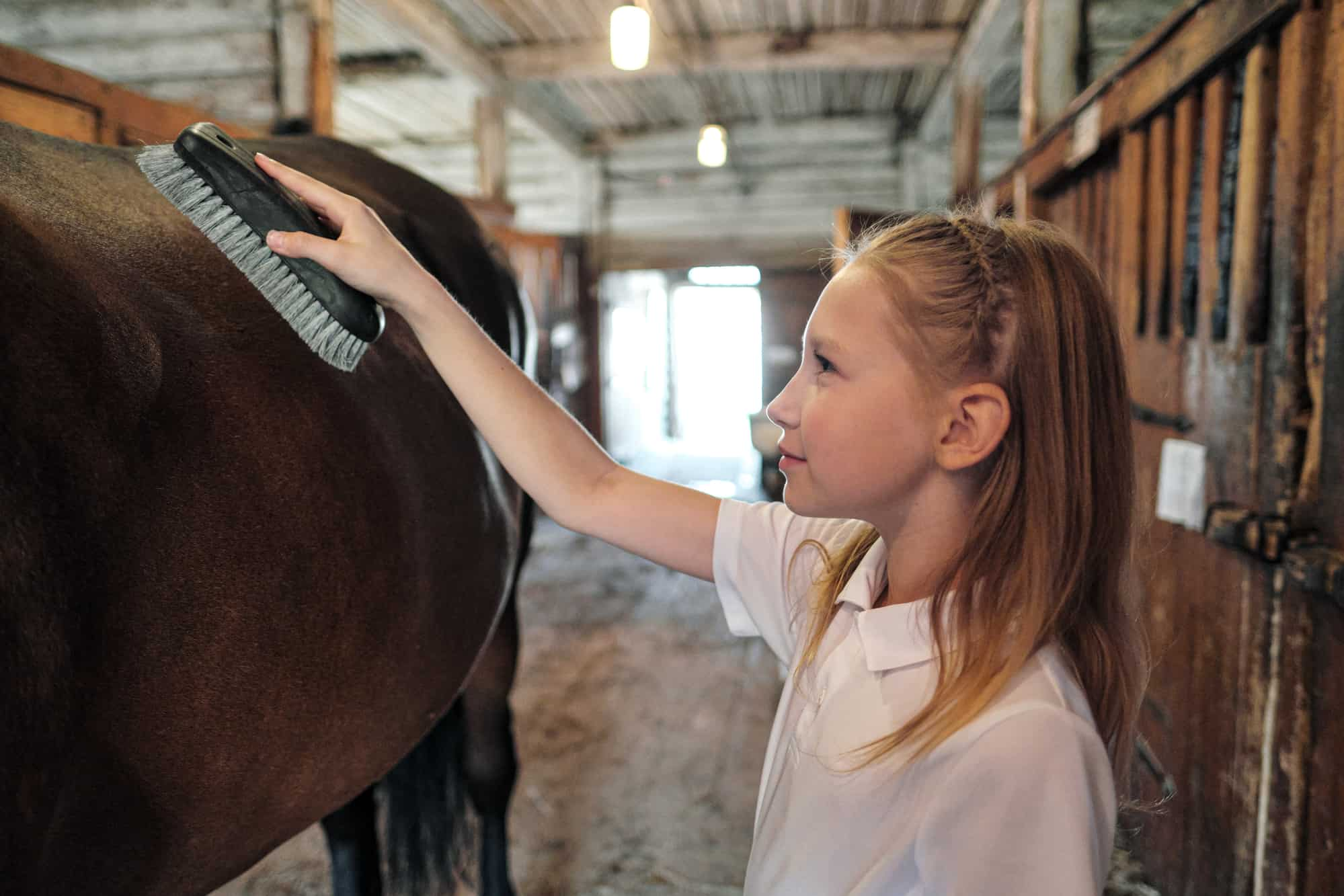 12 Year Old Girl Grooming a Horse